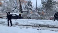 Karın Ağırlığına Dayanamayan Ağacın Dalı Kırıldı, Park Halindeki Araçların Üzerine Düştü