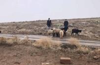 Kaybolan Koyunları Jandarma Termal Kameralı İHA İle Buldu