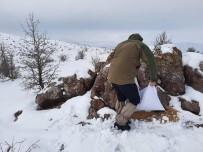 Sivas'ta Usulsüz Avlanan 4 Avcı Yakayı Ele Verdi