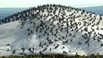 Yağmurda Aç Kalan Güvercinler Buğday Pazarını Mesken Tuttu