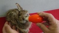 Zeytin Bahçesinde Bulduğu Yavru Tavşanı Biberonla Besliyor