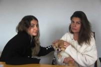 Köpeğin Saldırısına Uğrayarak Yaralanan Genç Kızın Annesi, Köpeği Ezmekle Suçlandı
