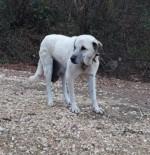 Köpekteki 3 Kilogramlık Tümör, Cerrahi İşlemle Alındı