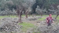 Marmaris Belediyesi Tarımsal Faaliyetlerine Devam Ediyor