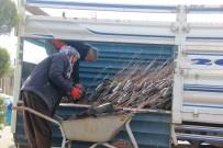 Şanlıurfa'da Yeni Yılda Fıstık Fidanı Satışları İki Katına Çıktı