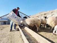 Hem Çobanlık Yaptı, Hem Ders Çalışarak Hayallerinin Peşinden Gitti