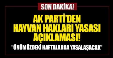 AK Parti'den Hayvan Hakları yasası açıklaması: Önümüzdeki haftalarda yasalaştıracağız