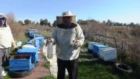 Burhaniye'de Arı Kovanlarında Varroa Mücadelesi Başlatıldı
