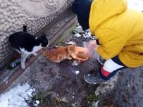 Karlı Havada Sokak Hayvanlarını Minik Elleriyle Beslediler