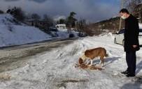 Sinop İl Özel İdare Sokak Hayvanlarını Unutmadı