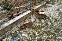 Soğuk Havalarda Sokak Hayvanları Unutulmuyor