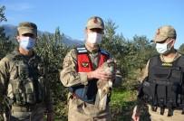 Devriye Gezen Jandarma, Yaralı Atmaca Buldu