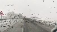 Diyarbakır'da Aç Kalan Kuş Sürüleri Yollara İndi