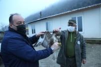 Kastamonu' Da Yaralı Halde Bulunan Şahin Tedavi Altına Alındı