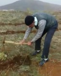 'Orman Dede' Bu Kez De 11 Bin Meşe Palamudunu Toprakla Buluşturdu