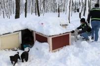 Serdivan Belediyesi, Sokak Hayvanlarını Yalnız Bırakmıyor