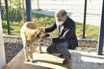 Sokak Köpeği 'Şanslı' Hayata Tutundu