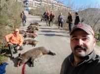 Fatsa'da Dev Domuzlar Avlandı