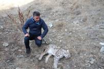 Kaçak Avcılar, Nesli Tükenmekte Olan Vaşağı Öldürdü