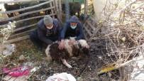 Pitbull Cinsi Köpekler Ağılda Adeta Katliam Yaptı Açıklaması 6 Koyun Telef Oldu