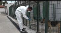 Sokak Hayvanları Tedavi Ve Rehabilitasyon Merkezi Hizmet Vermeye Devam Ediyor