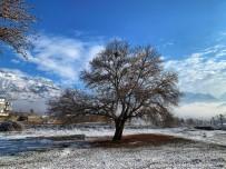 Tarihi Çınar Ağaçları Her Mevsim Ayrı Görsel Şölen Sunuyor