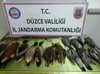 Avcılık Adı Altında Katliam Yapan Şahıs Trafik Uygulamasında Yakalandı