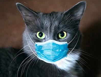 Güney Kore'de bir ilk! O da koronavirüse yakalandı!