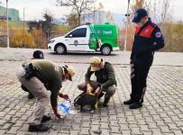 Karabük'te Yaban Hayvanları Unutulmadı