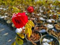 Karesi Belediyesi Kendi Bitkilerini Yetiştiriyor