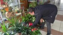 Kış Aylarında Salon Bitkilerinin Bakımına Dikkat