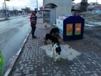 Seyitgazi Kaymakamlığı Sokak Hayvanları İçin Yiyecek Bıraktı