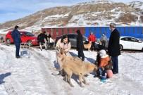Yemek Artıkları Ziyan Olmuyor, Sokak Hayvanlarının Karnını Doyuruyor
