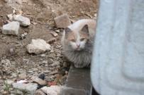 Çatıda Mahsur Kalan Kediyi İtfaiye Ekipleri Kurtardı