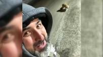 Et Dolu Aracın Yanında Aç Tilkinin Karnını Doyurdu Özçekim Yaptı