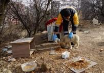 Kastamonu'da Sokak Hayvanları İçin 14 Ton Mama Harcandı
