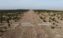 TİGEM Sahasında Her Yıl Bin Ton Bal Üretiliyor