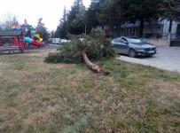 Beyşehir'de Şiddetli Fırtına Ağaçları Devirdi