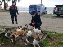 Erdek'te Sokak Hayvanları Unutulmadı