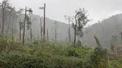 Hortum, Ormanı Savaş Alanına Çevirdi