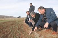 'Kar Yağışı Çiftçiye Can Suyu Oldu'