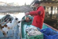 Kediler Karınlarını Doyurmak İçin Balıkçıların Yolunu Gözlüyor