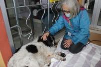 Köpeğinin Sopayla Dövüldüğünü İddia Etti