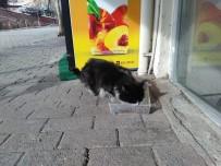 Cide'de Sokak Hayvanlarına Mama Dağıtıldı