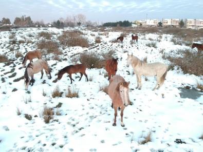 Drone Gören Yılkı Atları Poz Verdi