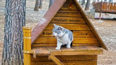 Kahramanmaraş'ta Sokak Hayvanlarına 37 Ton Mama