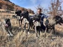 Tomarza'nın Çapar Köpekleri Büyük İlgi Görüyor