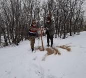 Tunceli'de Doğaya Keklik Ve Yem Bırakıldı