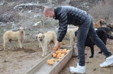 Artan Ekmekler Sokak Hayvanlarına Gidiyor