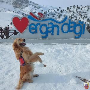 Jandarma Arama Kurtarma Köpeği 'Bulut' Ergan'da Poz Verdi